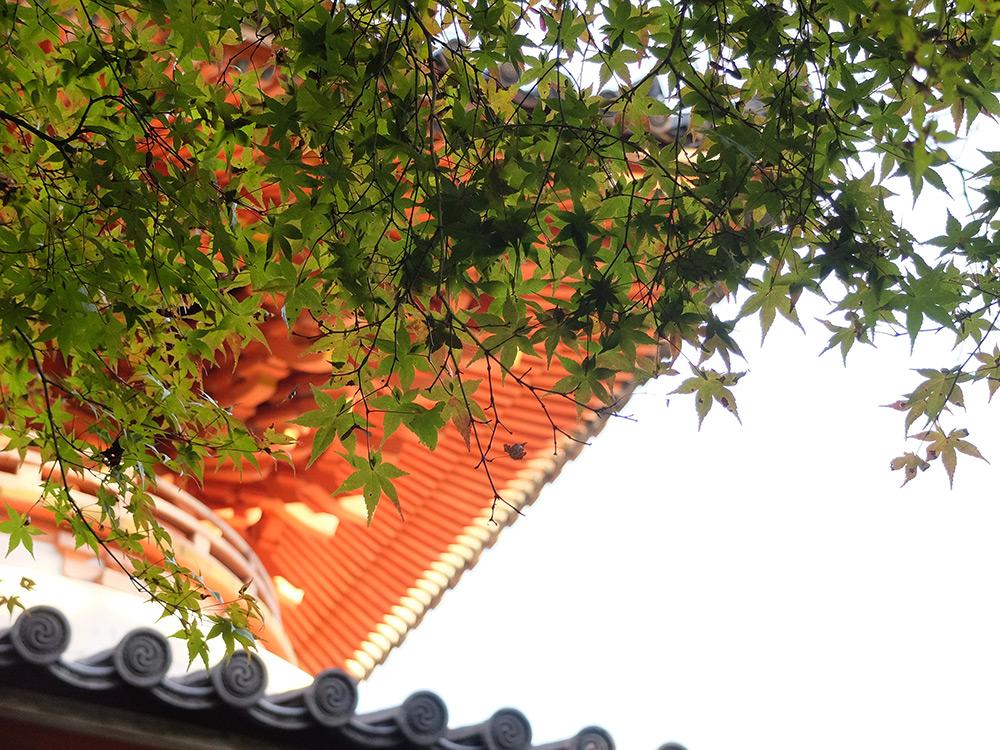 Feuilles d'érable et pagode Tahoto à Mitaki