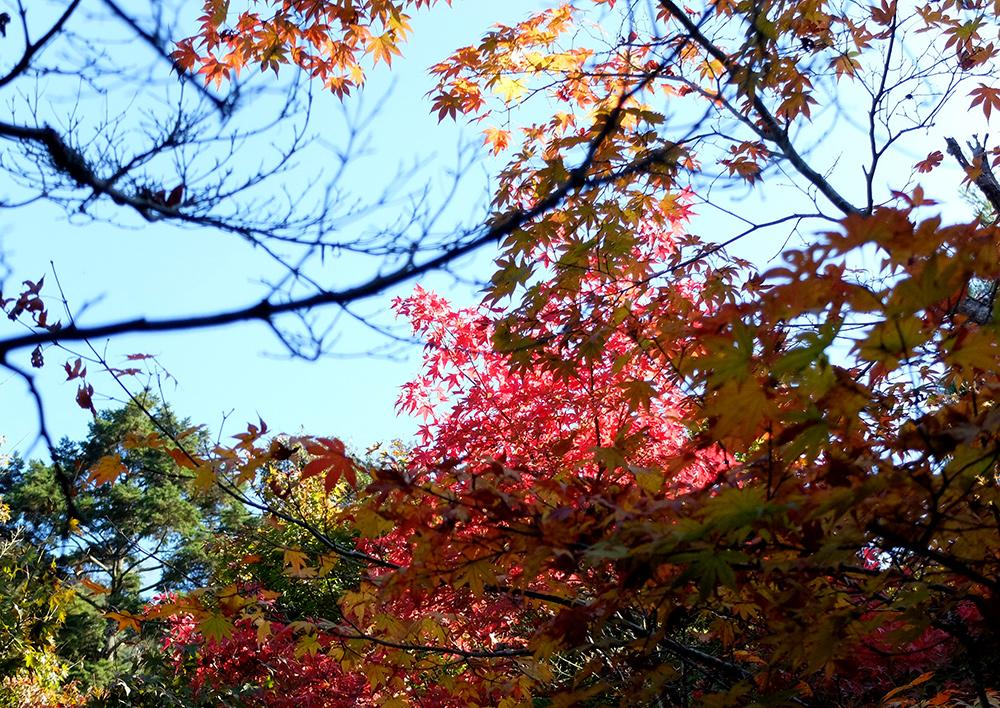 feuilles d'érable, Daisho-in, Miyajima