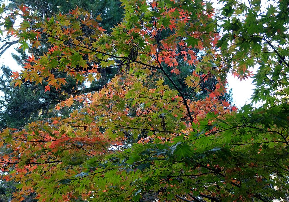 Parc Momijidani, Miyajima
