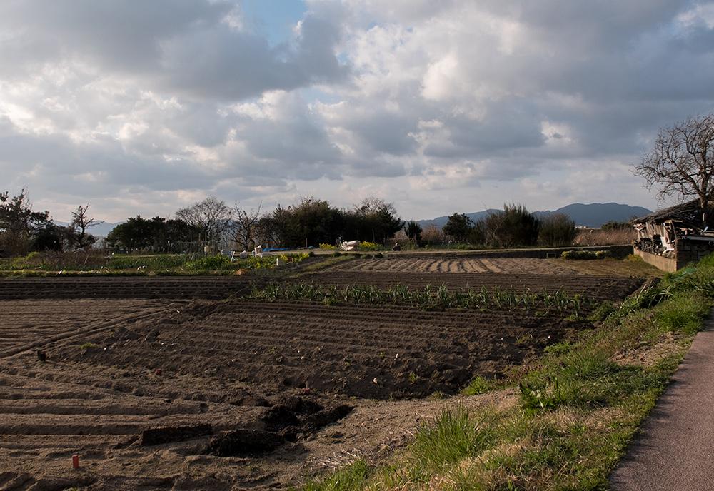 champs dans la préfecture de Shimane