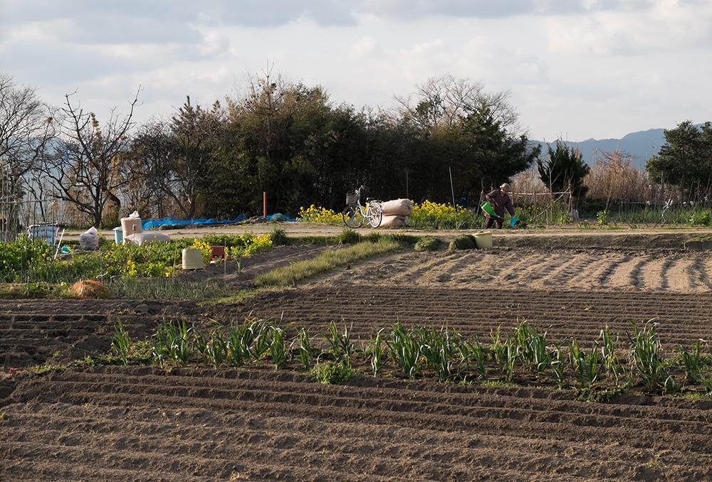 Champs, région agricole et rurale, préfecture de Shimane, Japon