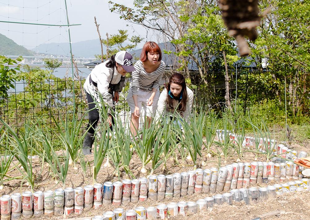 Cueillette d'oignon frais dans le jardin, Japon