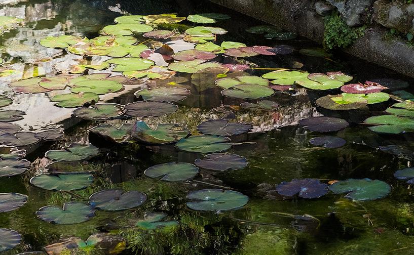 bassin de nénuphars au temple Ruriko-ji Yamaguchi