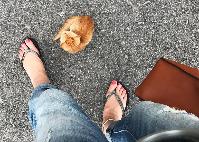 les chats d'Ishigaki