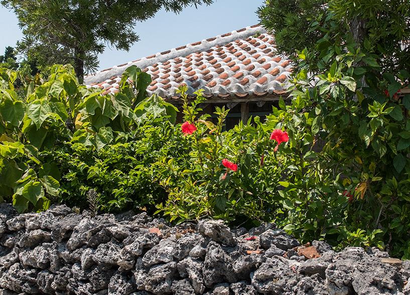 maison traditionnelle, muret de corail et hibiscus à Taketomi-jima, Okinawa