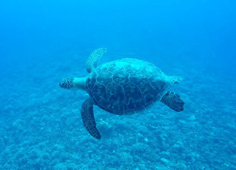 tortue de mer, snorkeling à Iriomote, Okinawa