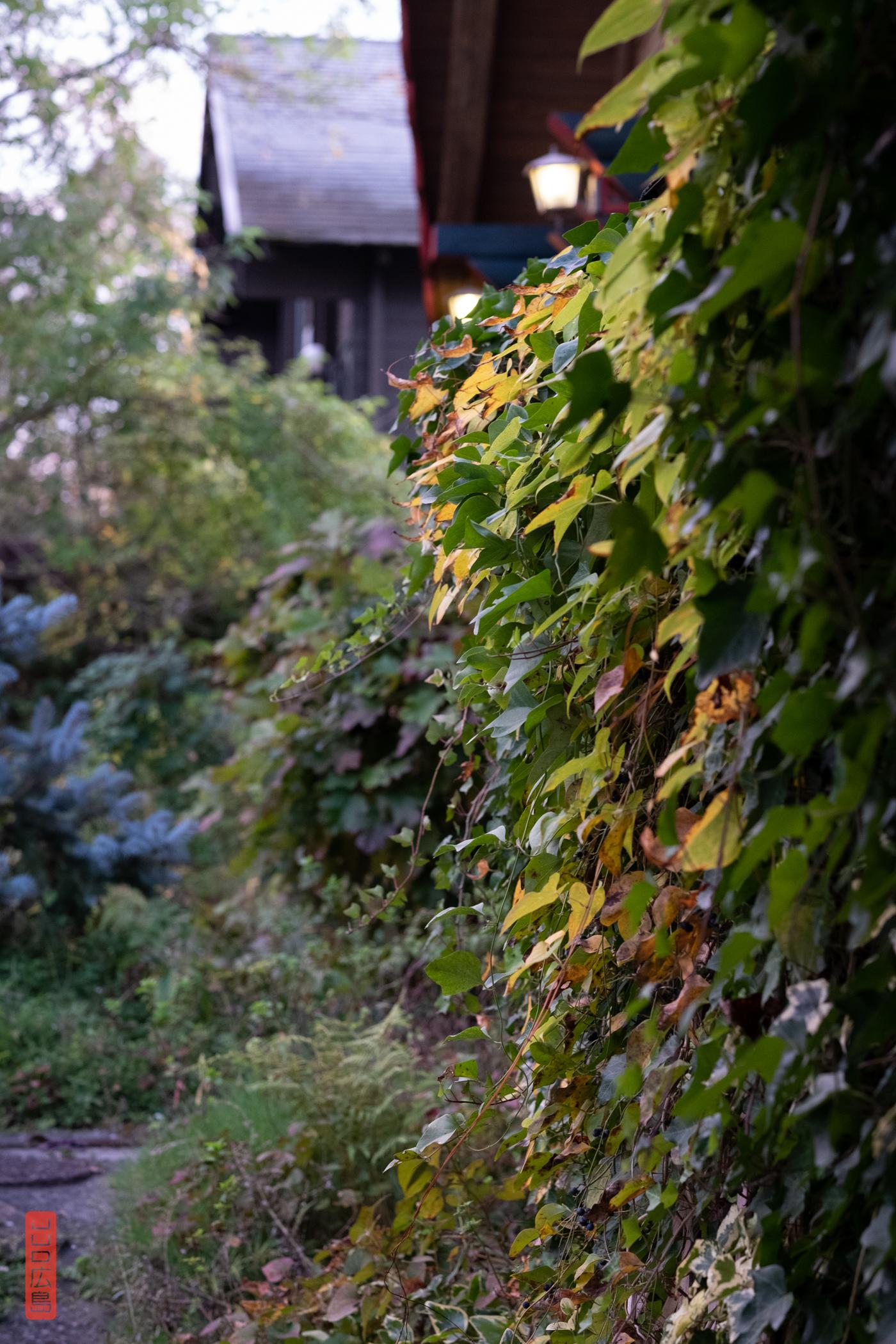 Jardin de la pension Dandan