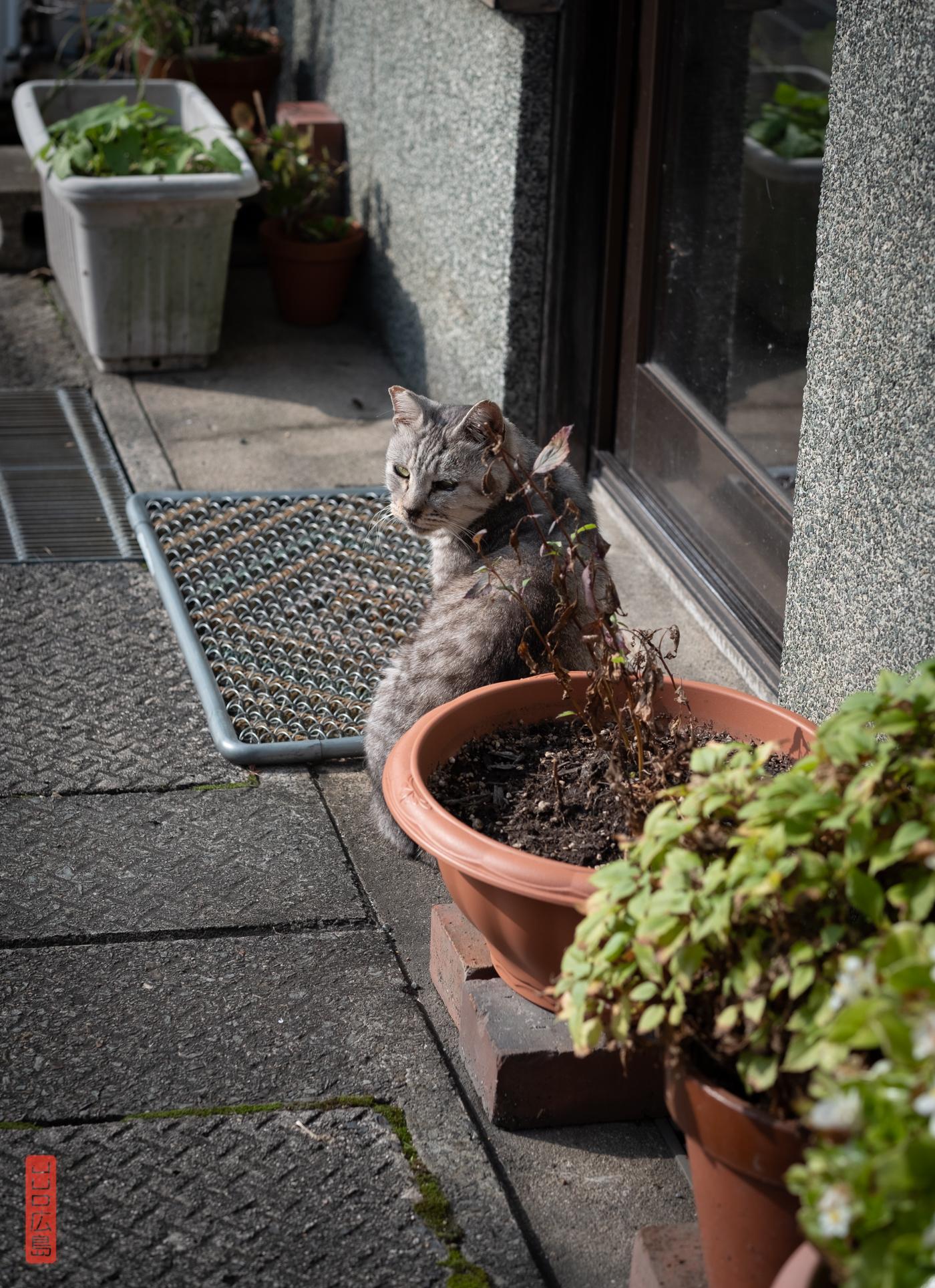 chat dans les ruelles de Kurayoshi