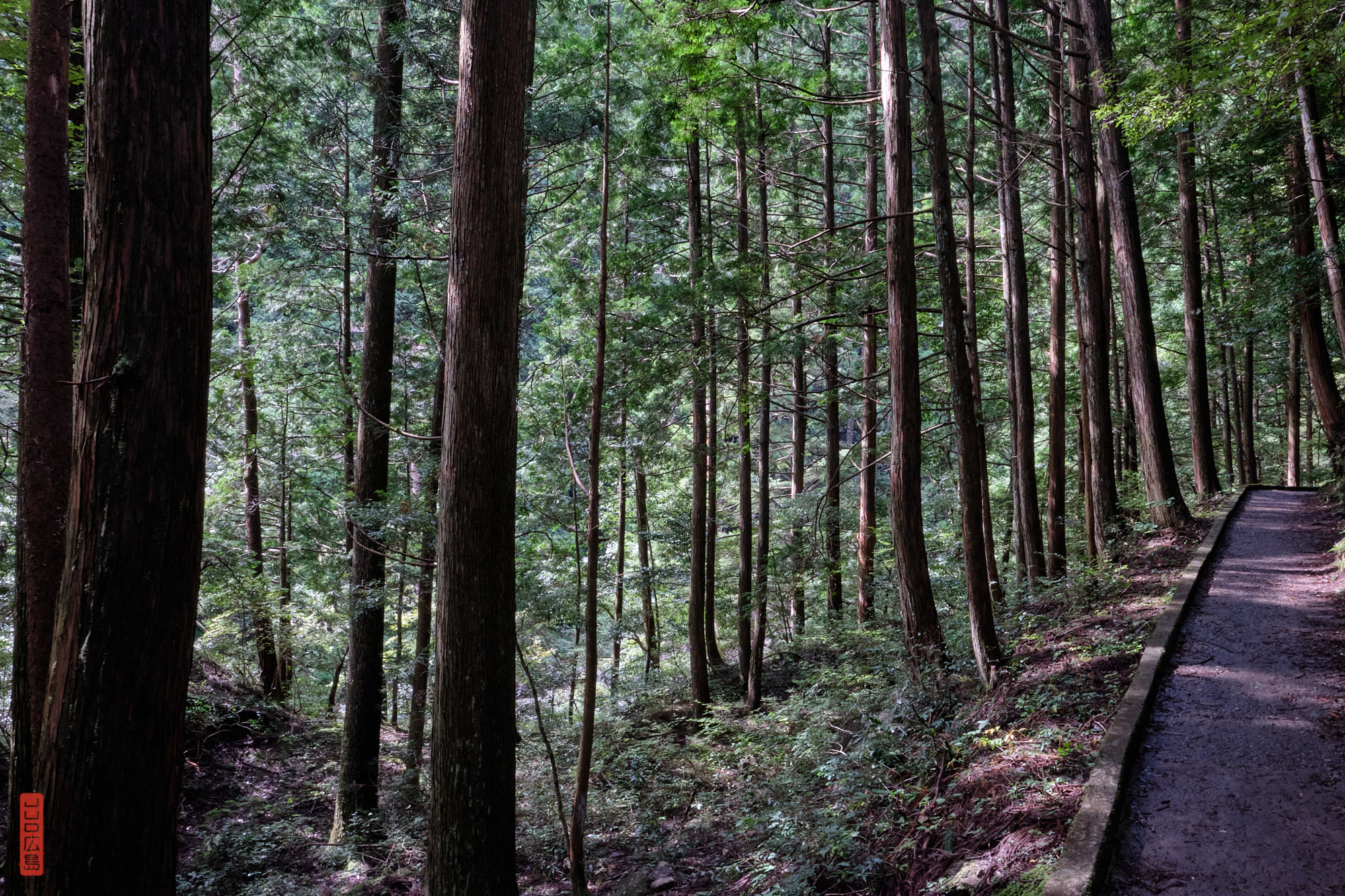 Sentier dans la forêt à Sandankyo, Hiroshima