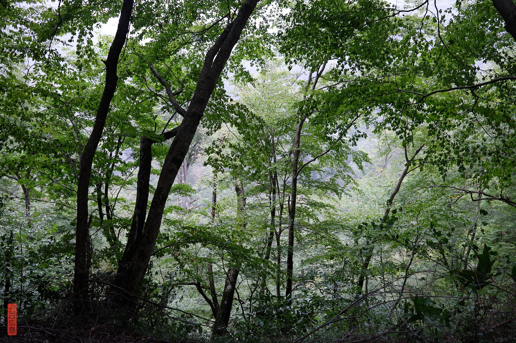 Sandankyo, sentier dans la forêt
