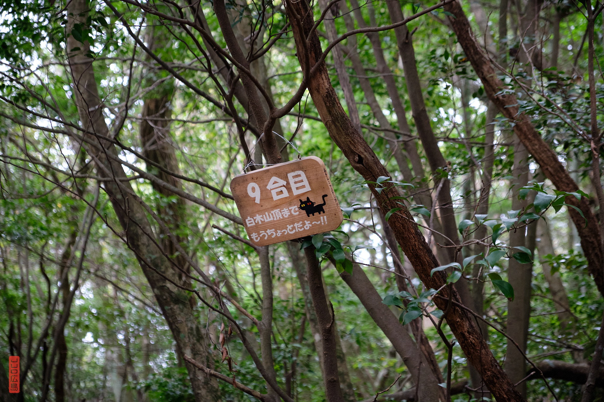 Mont Shirakiyama, 9eme borne