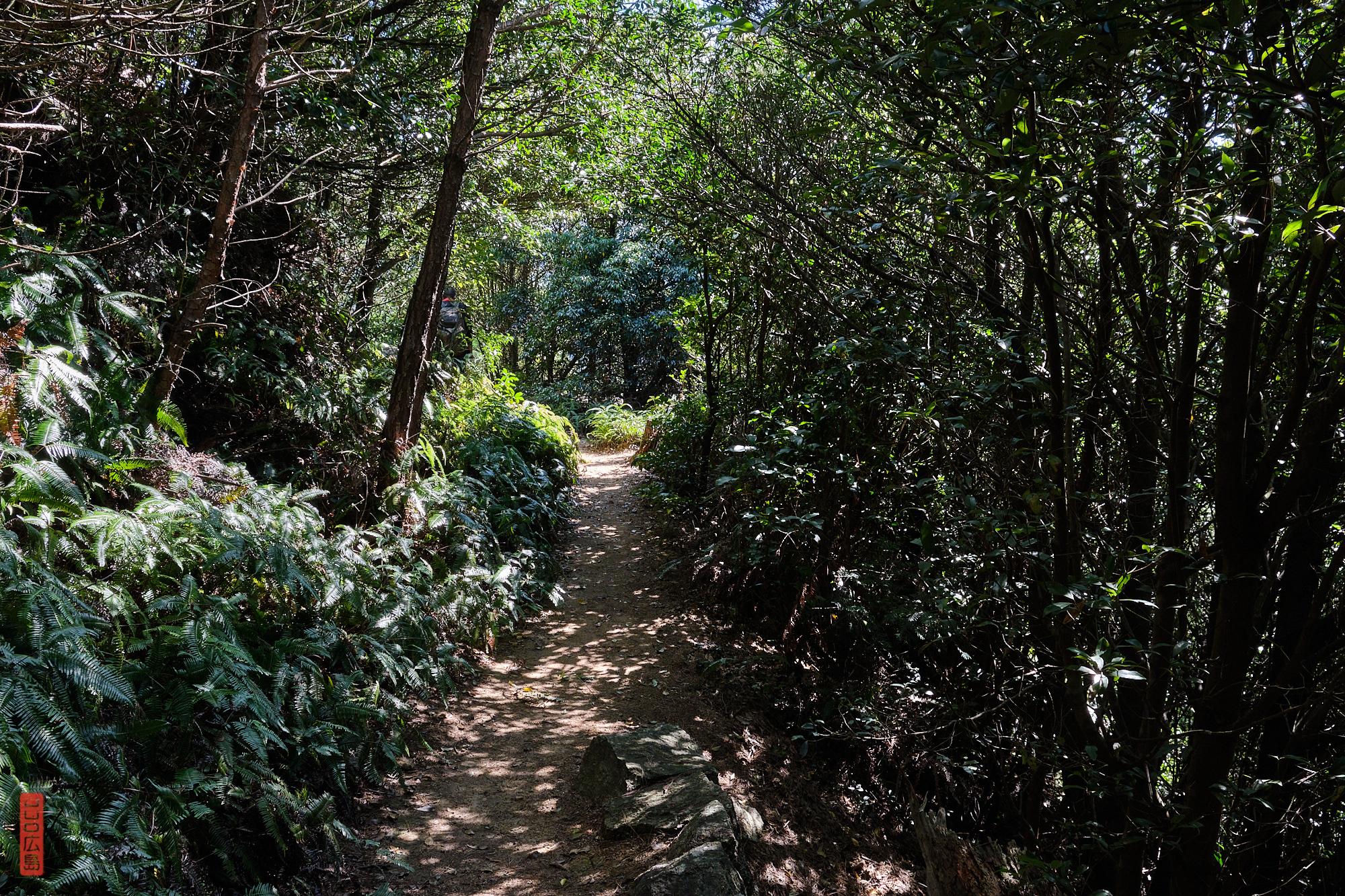 sentier de randonnée près du mont Komagabayashi, Miyajima