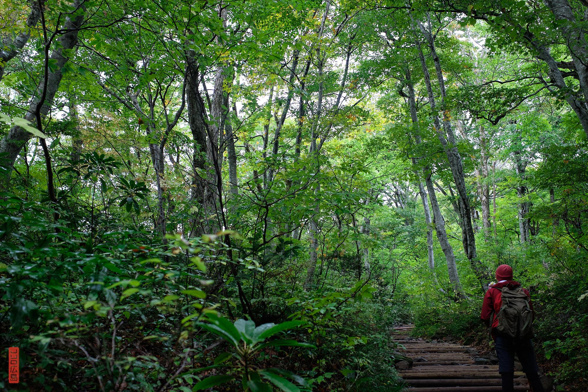 Forêt au pied chemin de randonnée du Mont Daisen