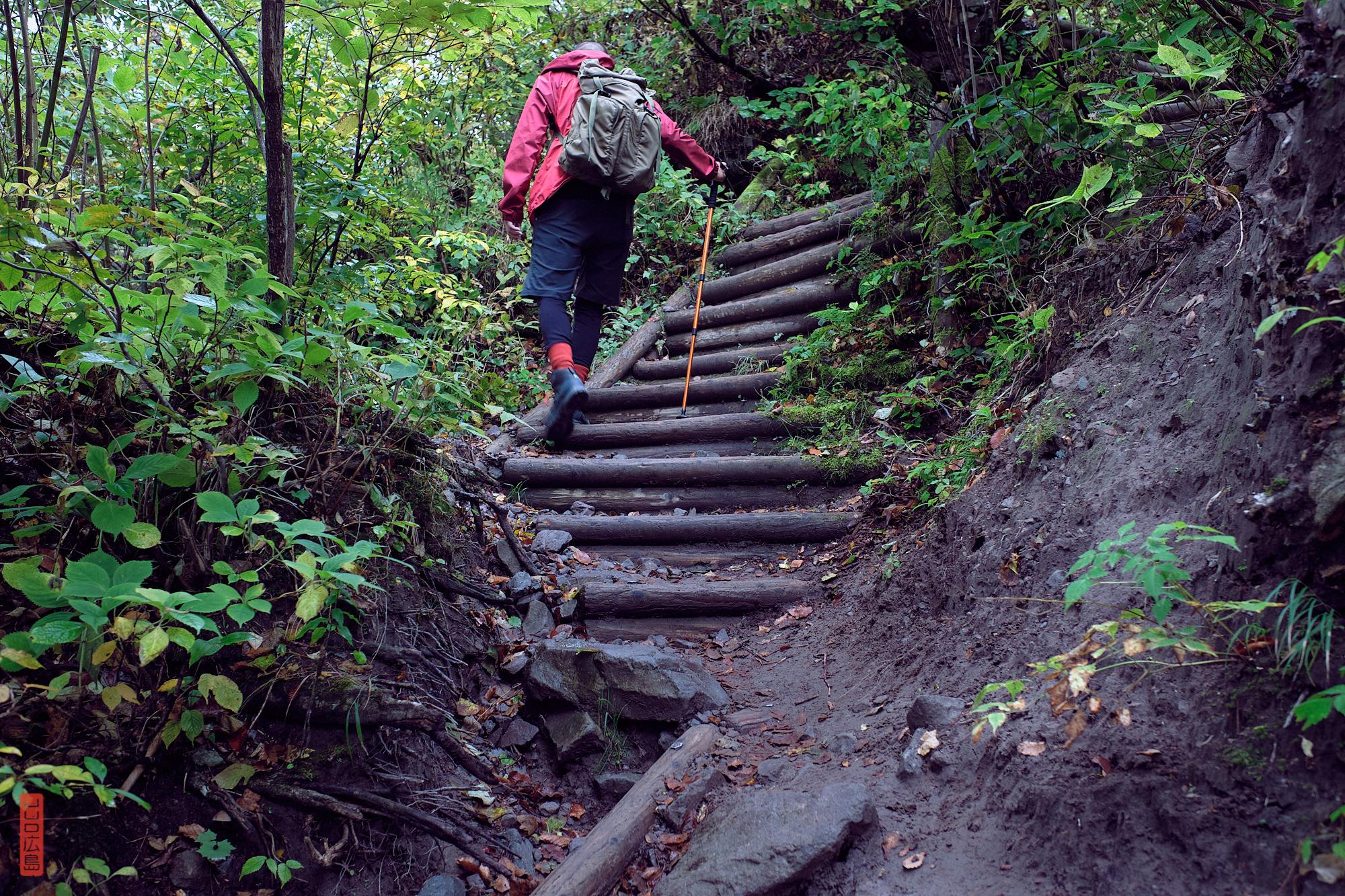 marches en bois dans la forêt, randonnée mont Daisen