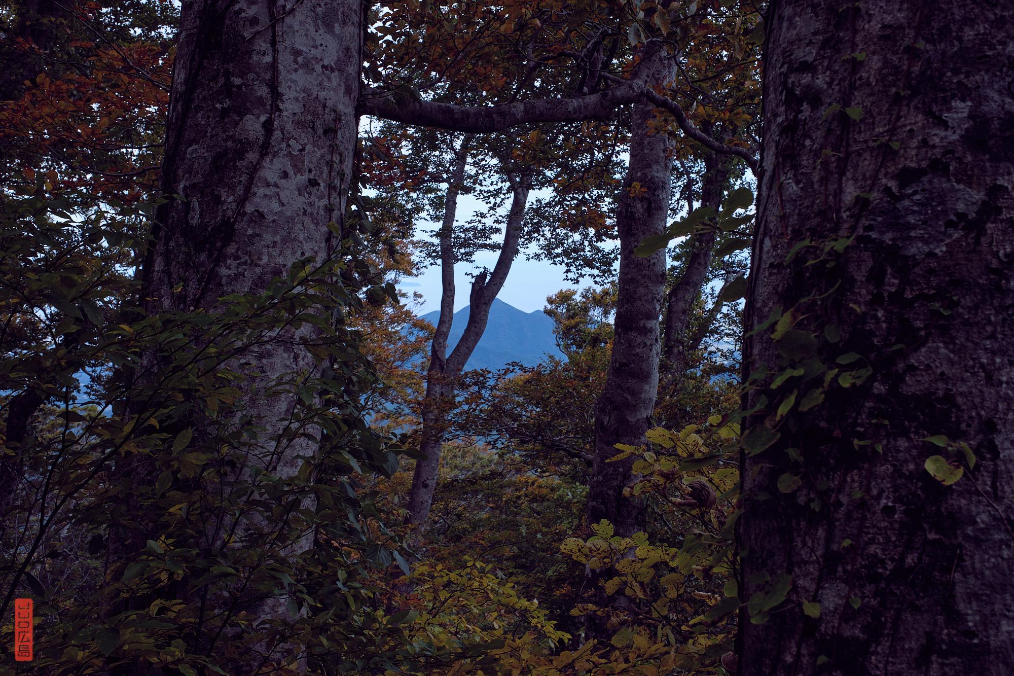 Randonnée sur le Mont Daisen, les mont alentours à travers les arbres