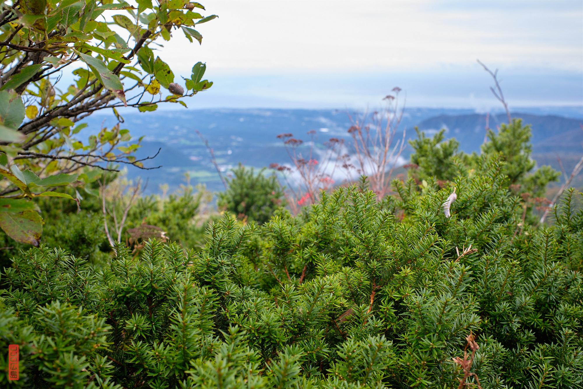 buissons de kyaraboku, Mont daisen