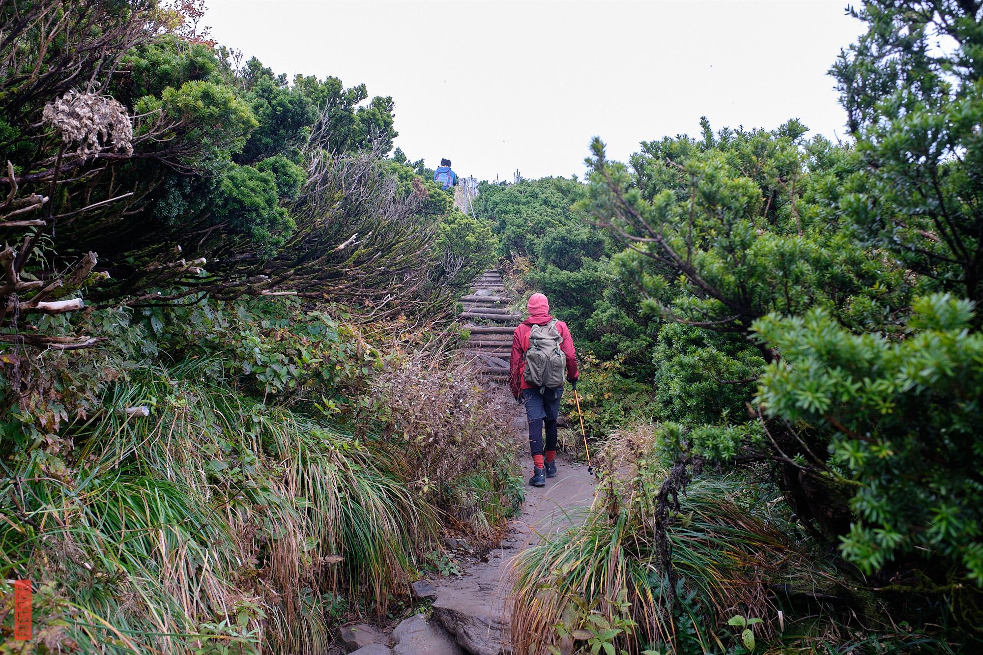 sommet du mont Daisen, kyaraboku