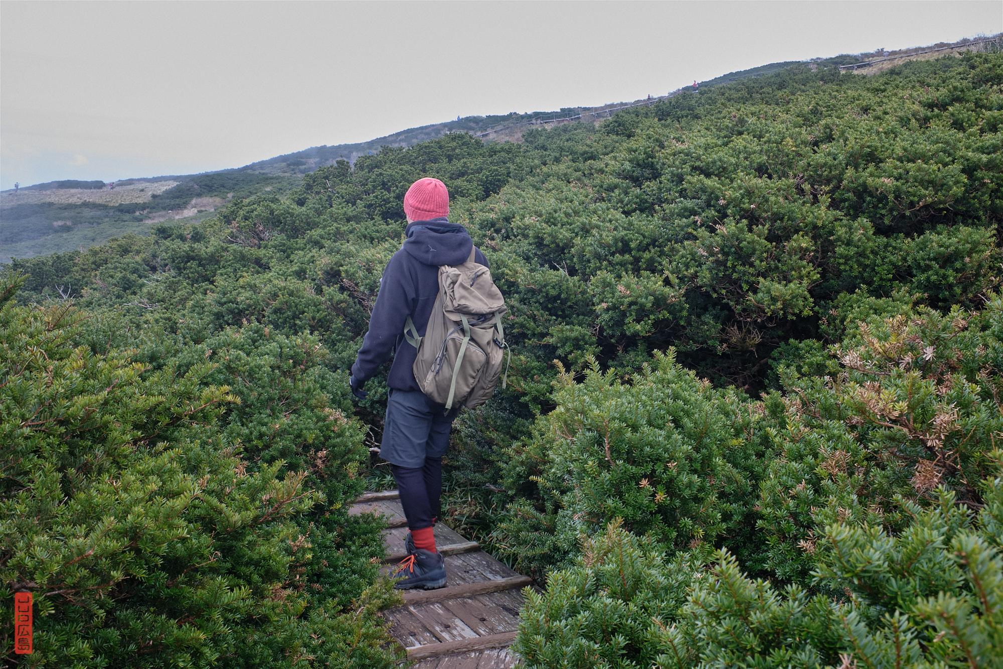 Sommet du mont Daisen dans les champs de kyaraboku