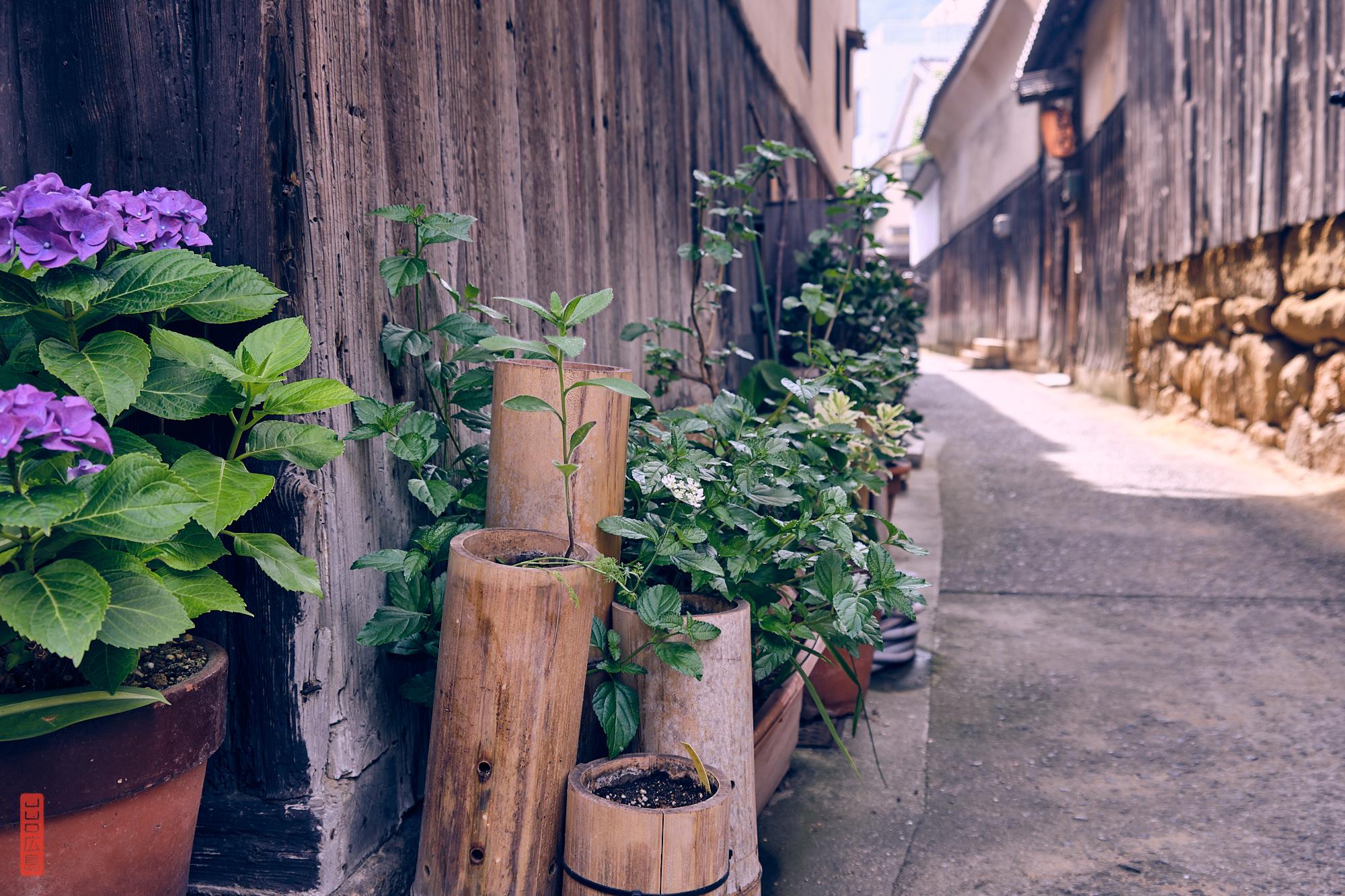 Les fleurs et les plantes dans les ruelles de Tomo-no-Ura