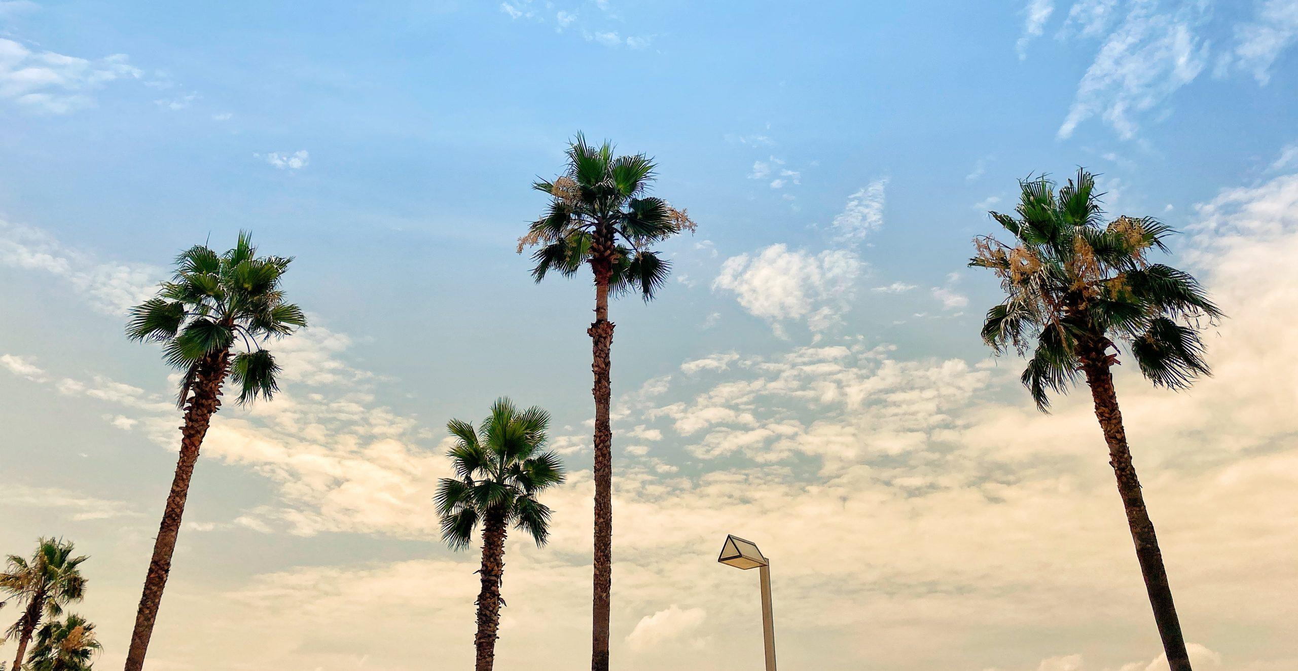 profiter de la liberté d'être freelance pour aller à la plage un lundi