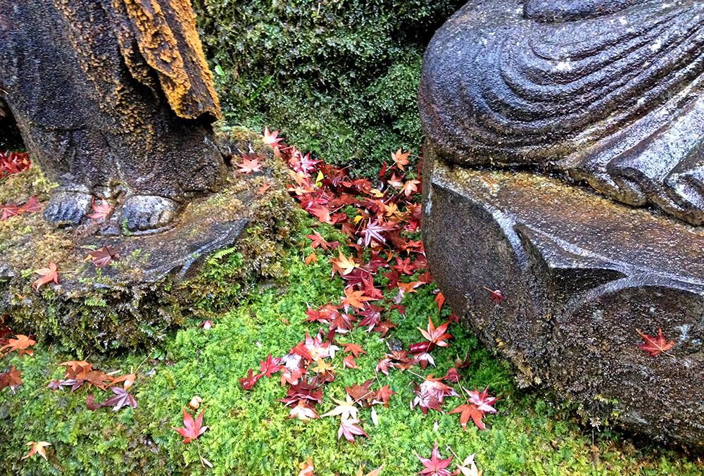 Mousse et feuilles d'érables à Mitaki