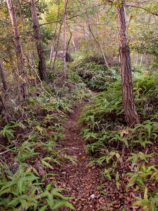 Forêt et fougères à Mitaki