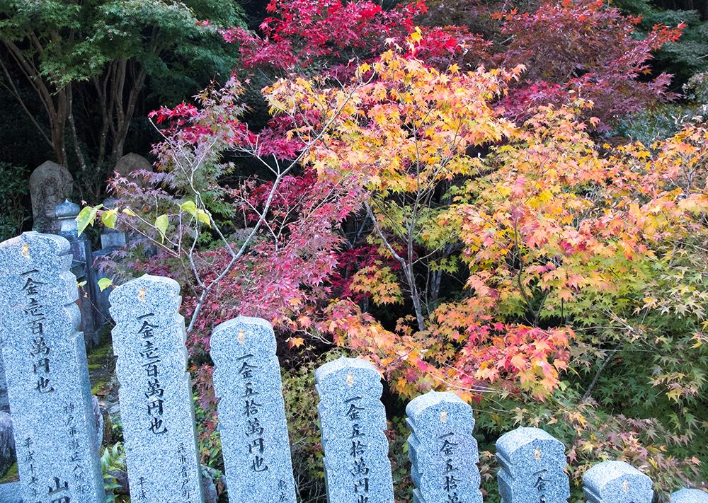 Feuilles d'érables rouge au temple Daisho-in