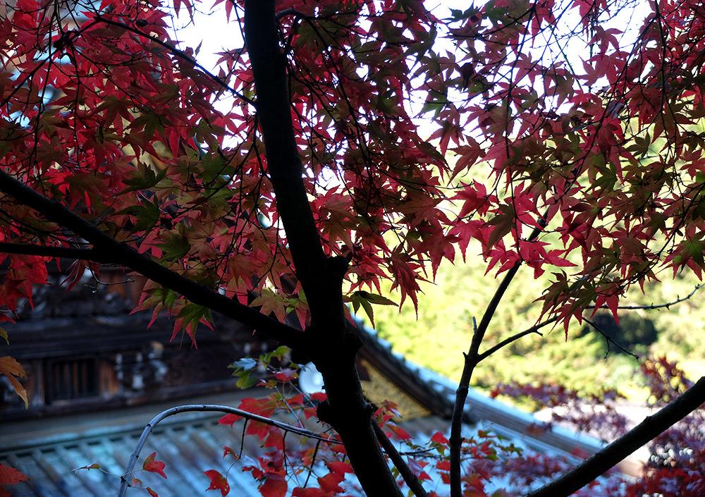 Pavillon Maniden, Daisho-in, Miyajima, feuilles d'érables