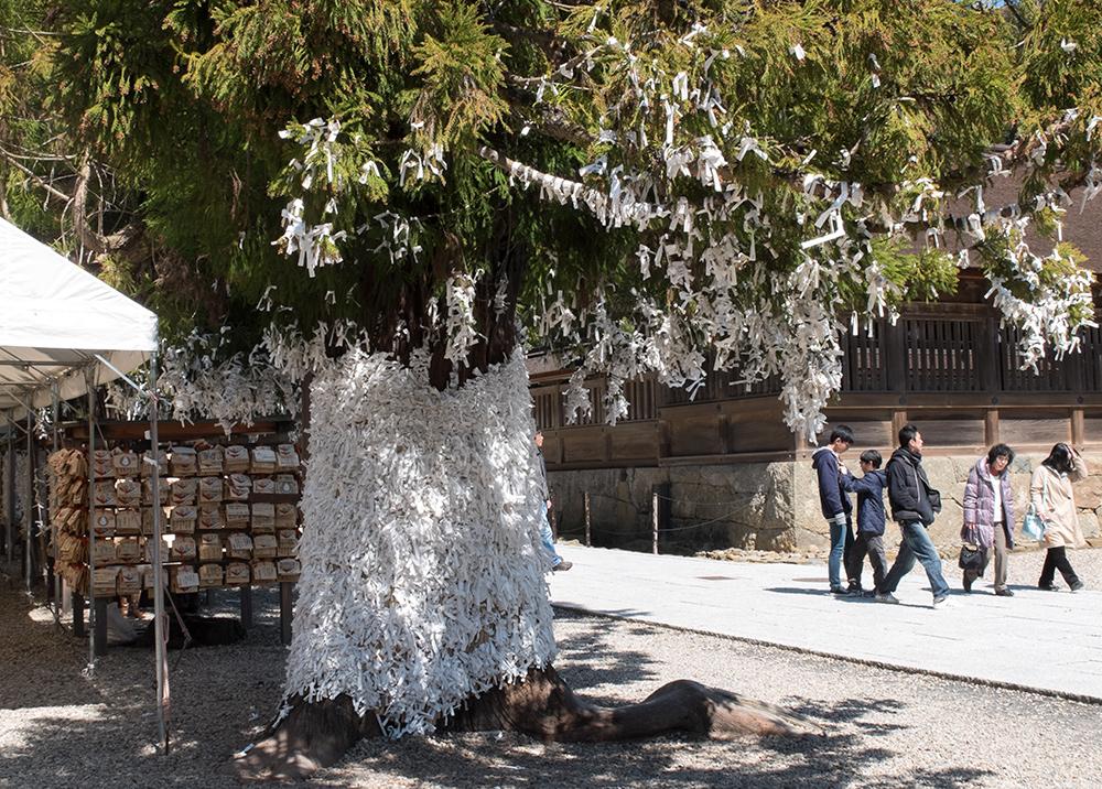 arbres recouverts d'omikuji, Izumo Taisha