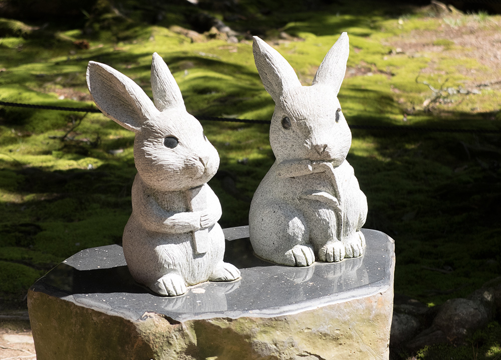 Lapins blancs, sanctuaire Izumo Taisha