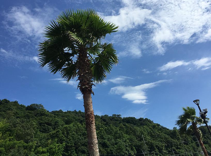 palimer Mizushiri plage Hiroshima