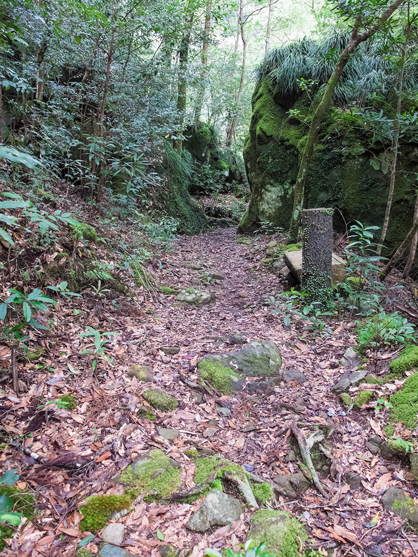 Forêt, Cascades de Todoroki, Tokushima