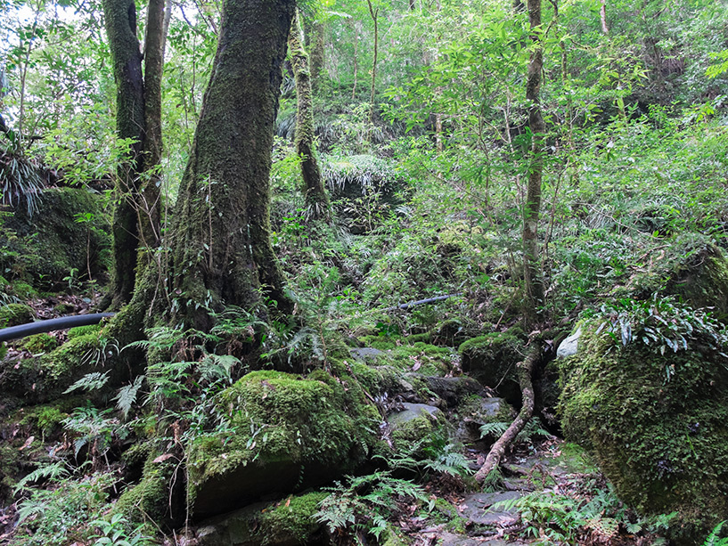 Promenade forêt, Cascades de Todoroki, Tokushima