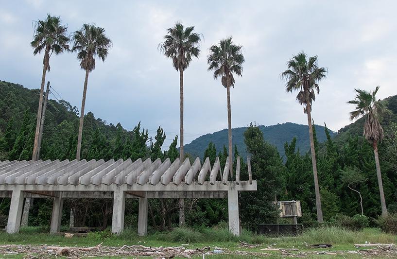 Palmiers, Ozuna Beach, Kaifu, Tokushima